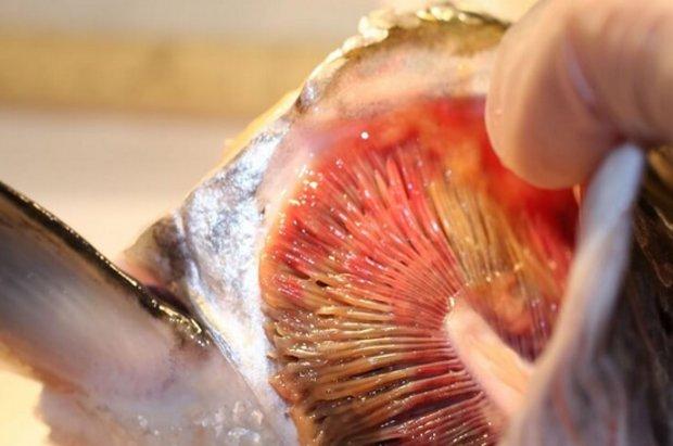 Болезни аквариумных рыбок и их лечение в домашних условиях