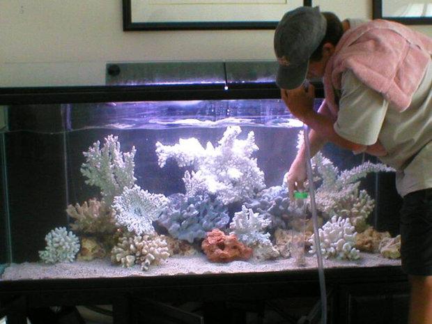 Использование сифона для уборки аквариума