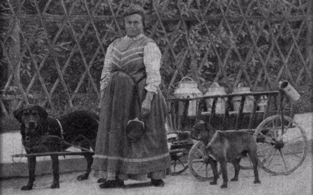 Историческое фото ротвейлеров