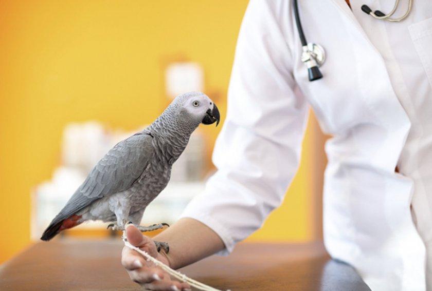 Попугай у ветеринара