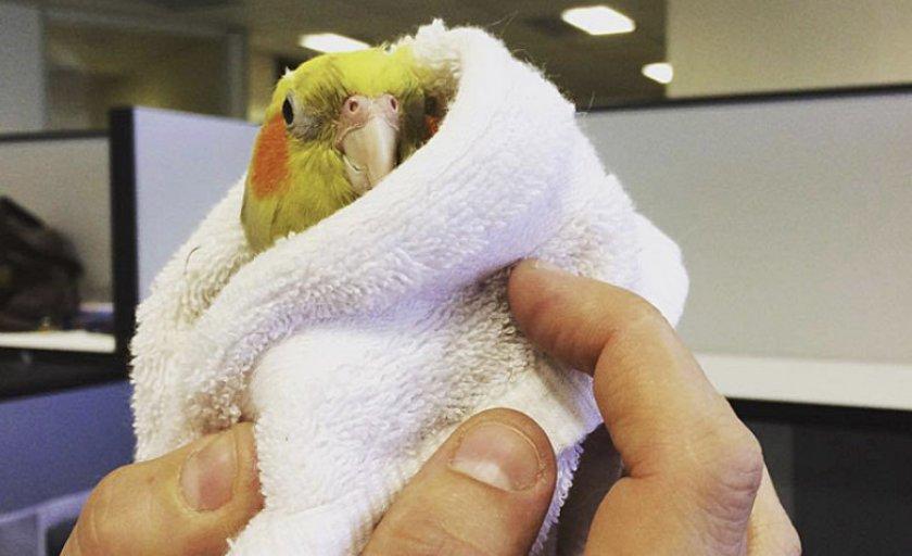 Попугай в полотенце
