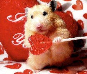 Хомяк держит конфету