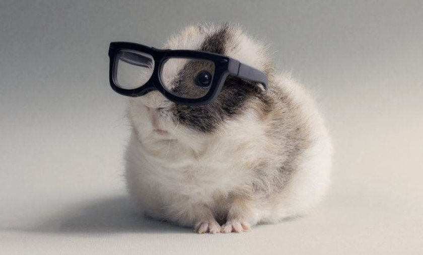Хомяк в очках