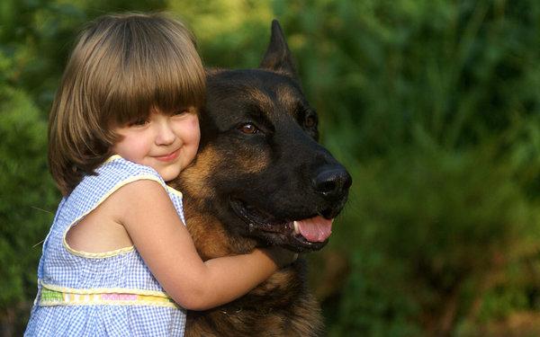 Уход и воспитание щенка немецкой овчарки: описание, фото, сколько гулять, чем кормить, как дрессировать