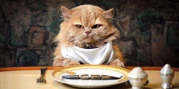Как выбрать корм для кота