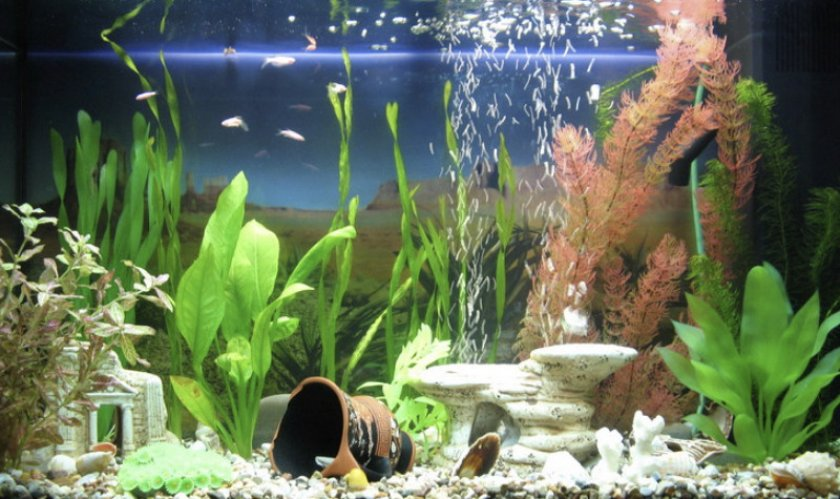 это красивые искусственные водоросли аквариума фото этого