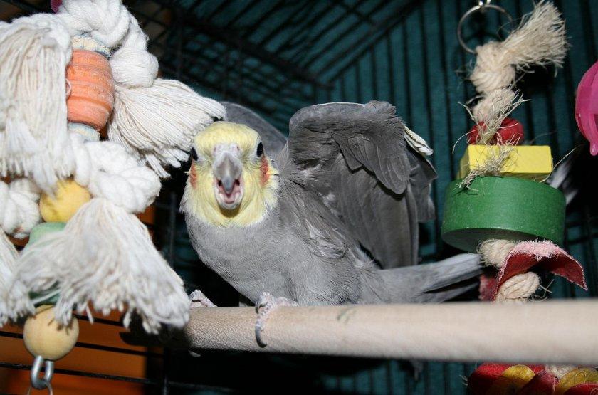 сказки старого попугая фото сегодняшний день
