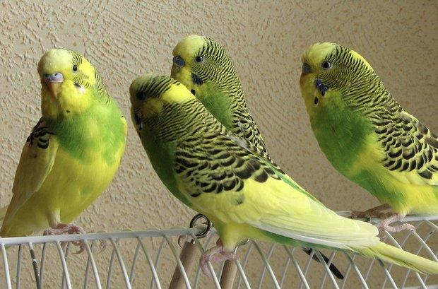 Как и из чего сделать домик для попугаев своими руками фото 517