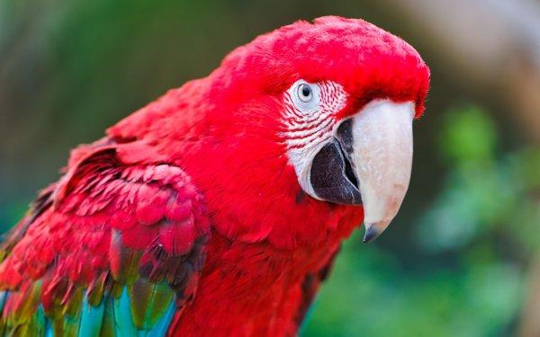 Попугай не ест - как помочь питомцу?
