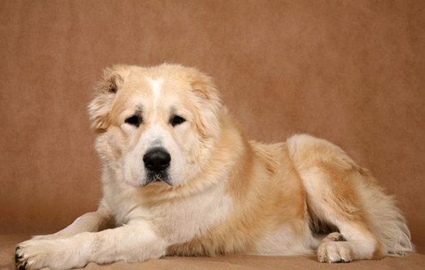 Артрит у собак типы болезни и способы лечения