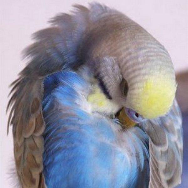 Как вывести блох у попугая — избавляемся от вредителей у домашнего питомца