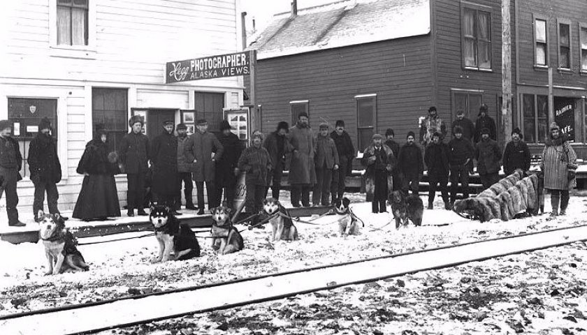 Маламуты в упряжке, Аляска, 1898 год
