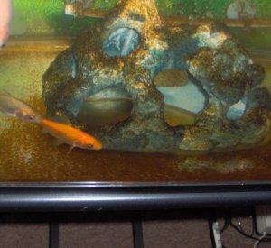 Налет в аквариуме
