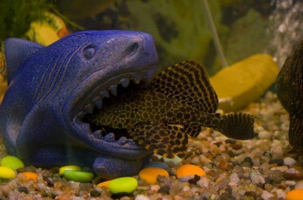 Как появляется рыба из икры