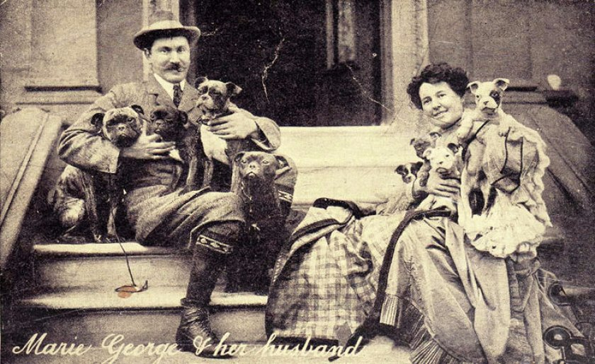 Французский бульдог на ретро-фото