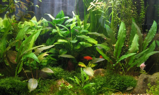 Как сажать аквариумные растения без корней 46