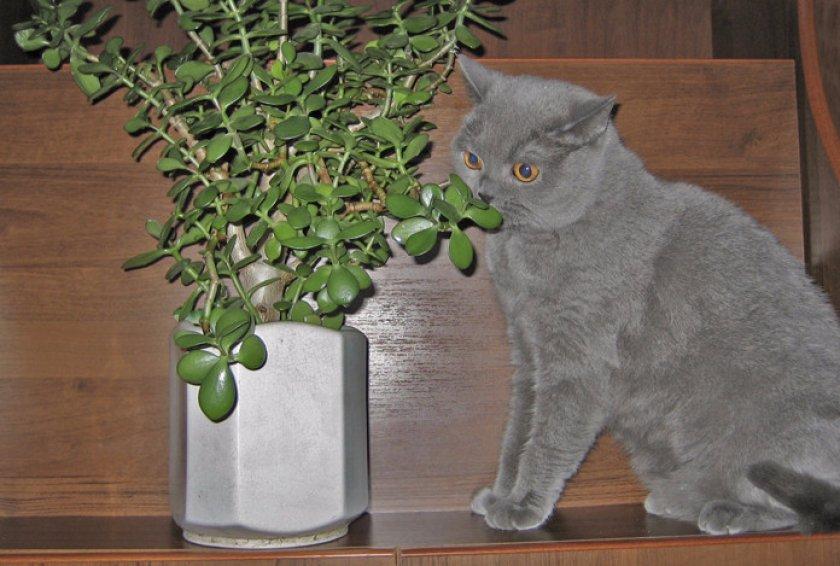 Кошка и комнатные растения