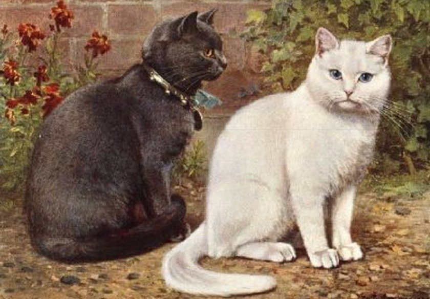 История британской кошки