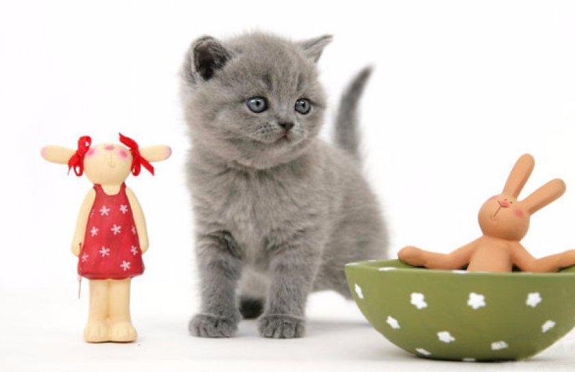 Котенок среди игрушек