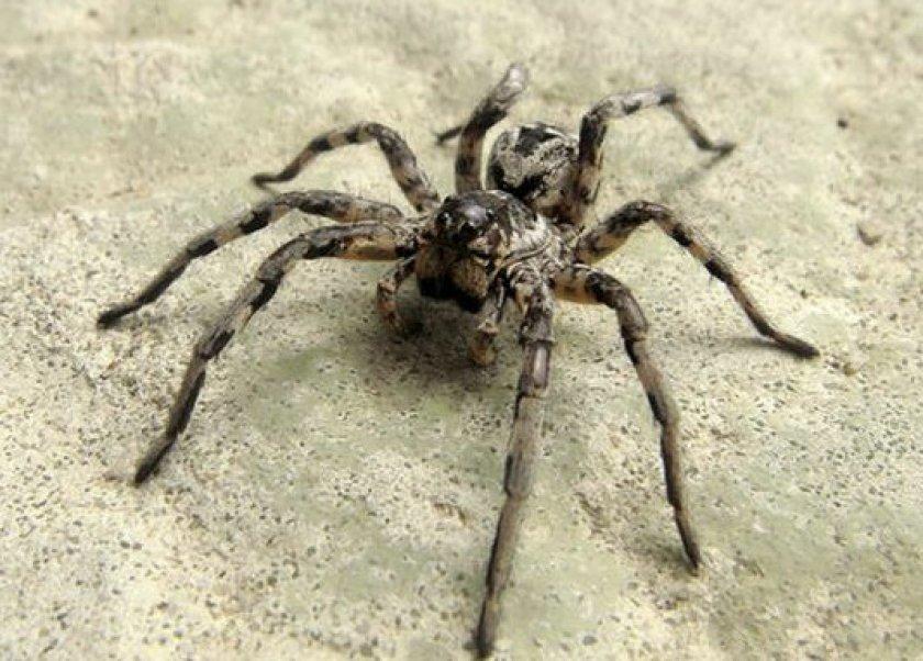 этиологию заболевания, тарантул ростовская область фото надежность осуществляет строительство