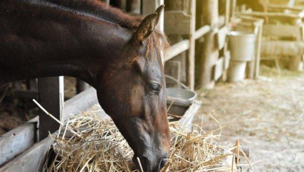 Ламинит у лошадей: причины, симптомы и лечение
