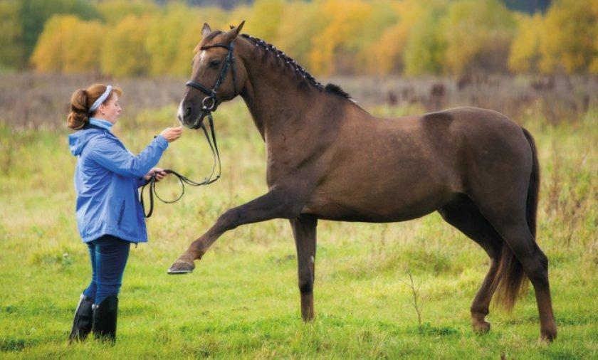 Выгул лошади