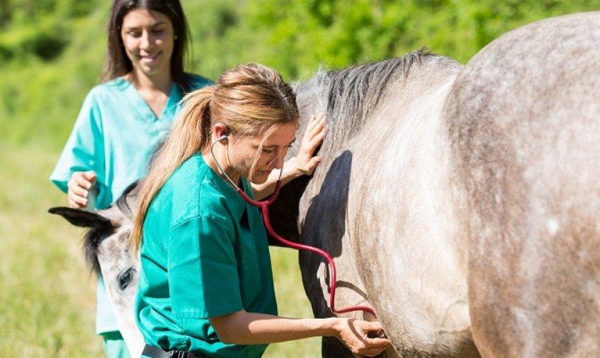 Ветеринар и лошадь