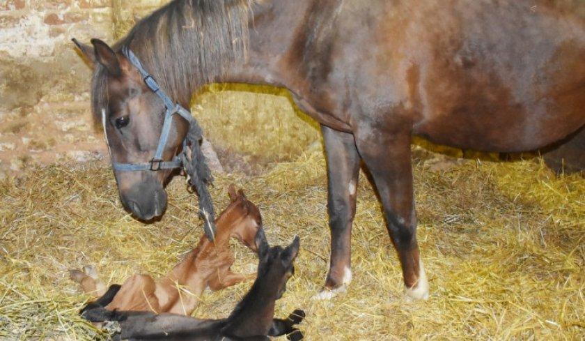 Лошадь с малышами