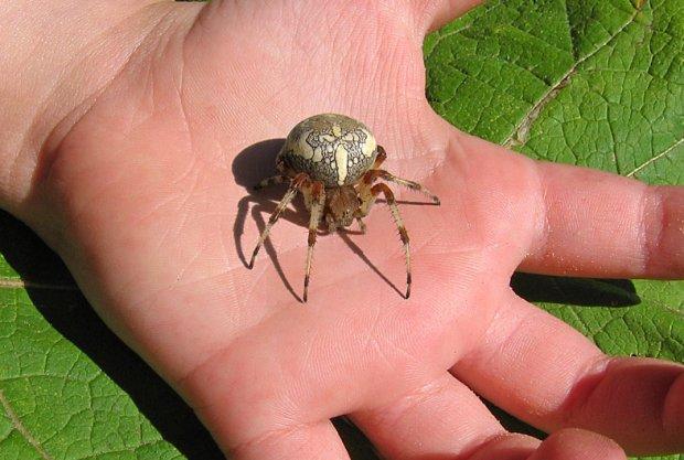 Первая помощь при укусе паука
