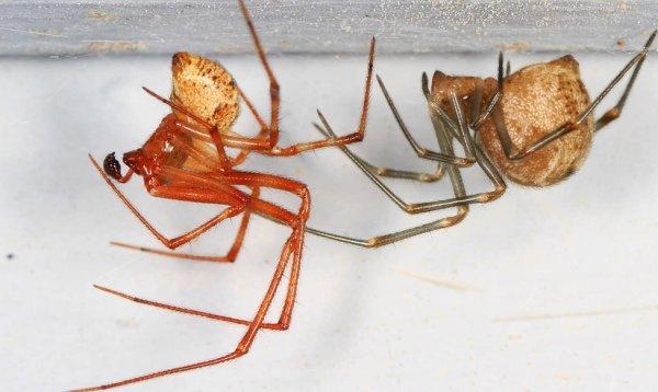 Как избавиться от пауков в доме навсегда