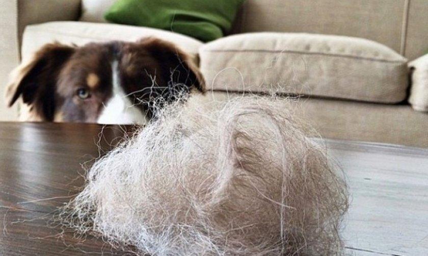 Собачья шерсть