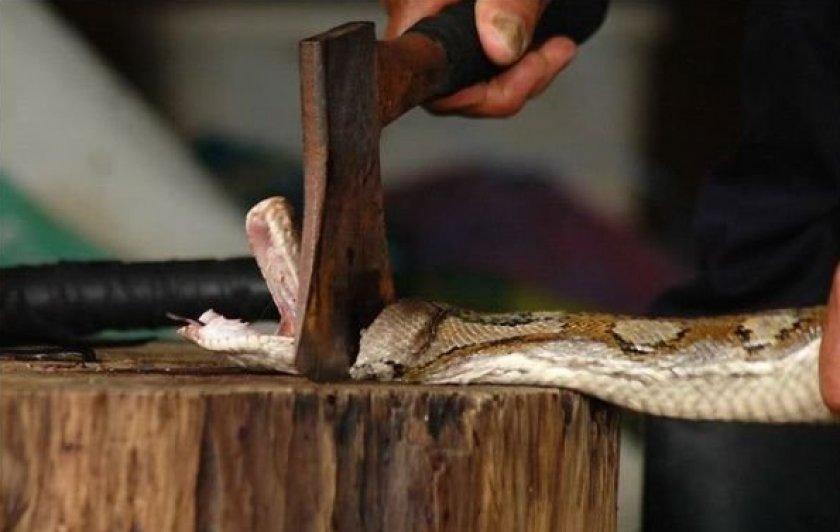 Змея без головы