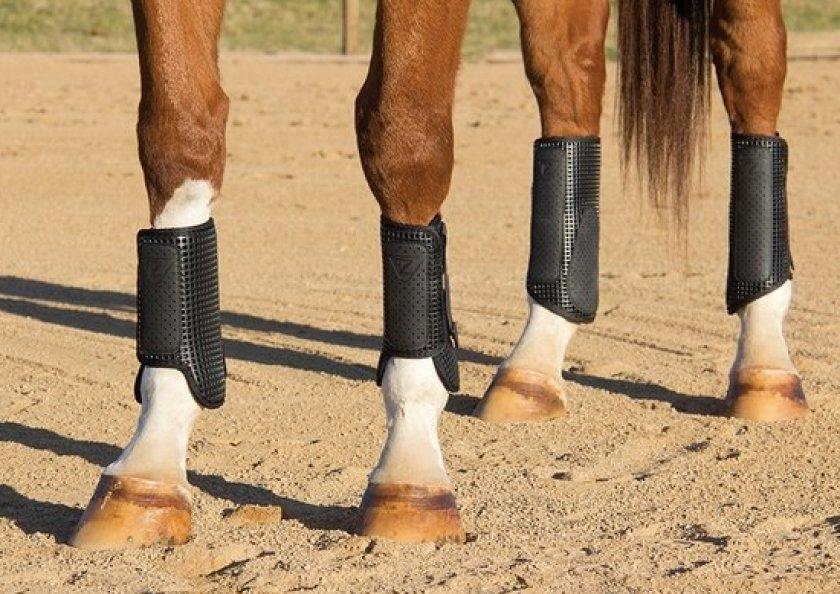 Сухожильные ногавки для лошадей