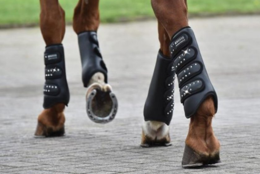 Для чего нужны ногавки для лошади