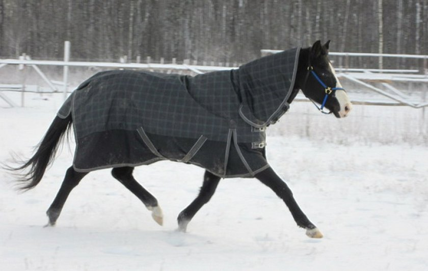 Попона для лошади