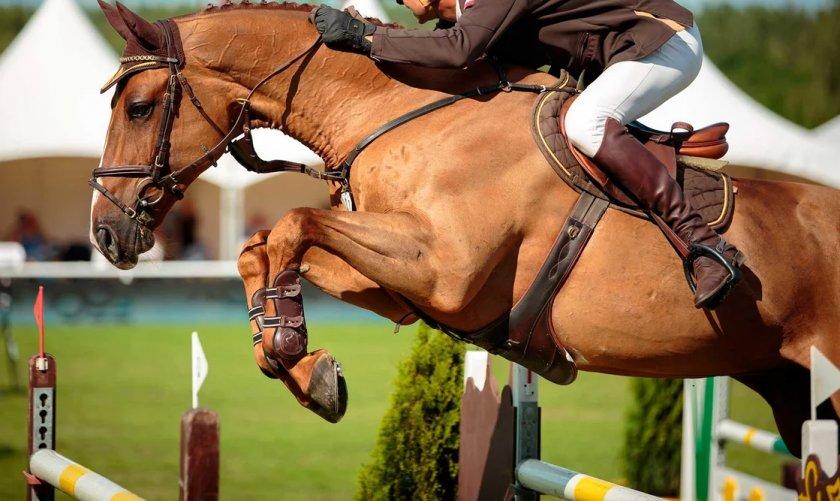 Вред конного спорта