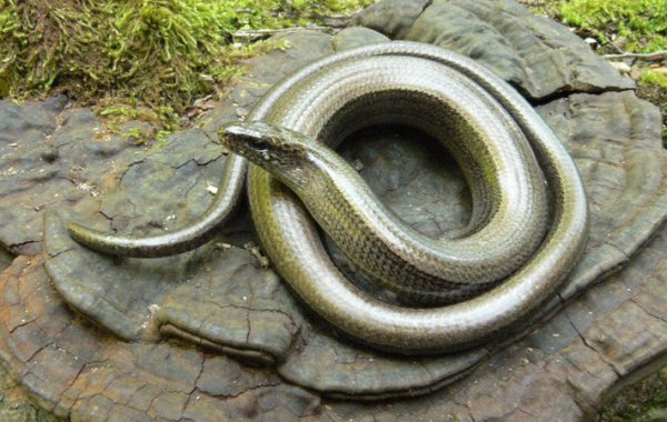 Ядовитые змеи: 100 фото, описание и названия ядовитых