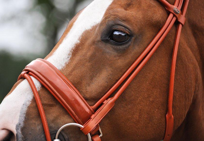 Уздечка для лошади