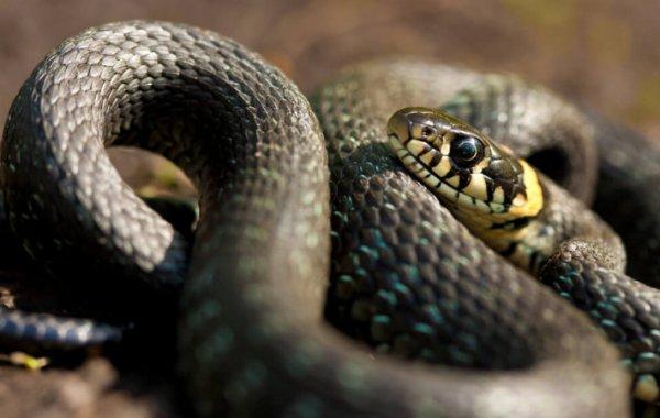 Виды змей, их названия