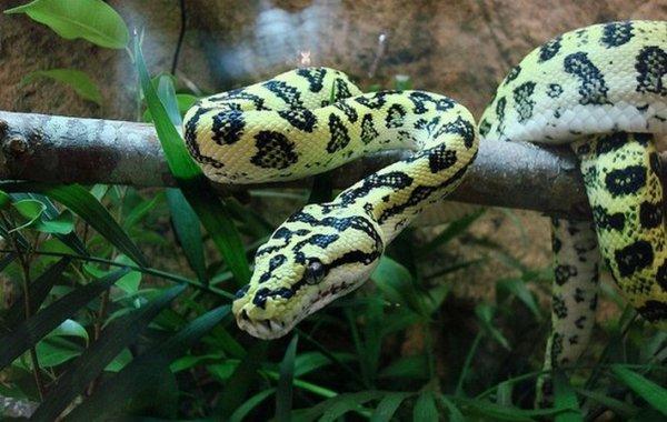 Описание, особенности, названия и фото видов