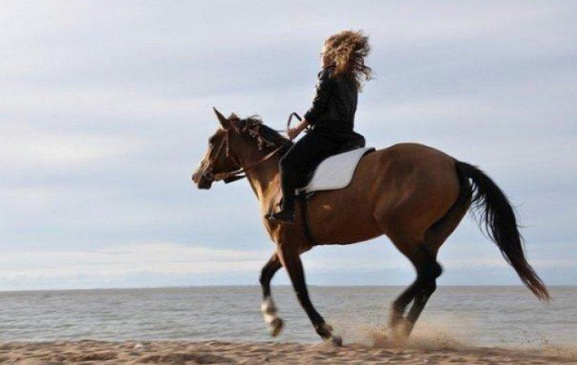 Лошадь галопом