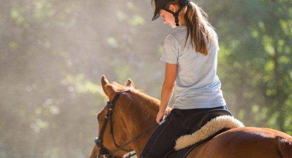 Как седлать лошадь основные правила