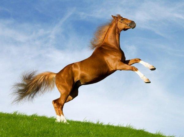 Сколько весит лошадь: вес по породам, рассчет веса, фото