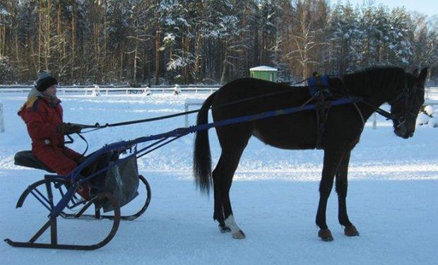 Сани для лошади своими руками чертежи фото 880