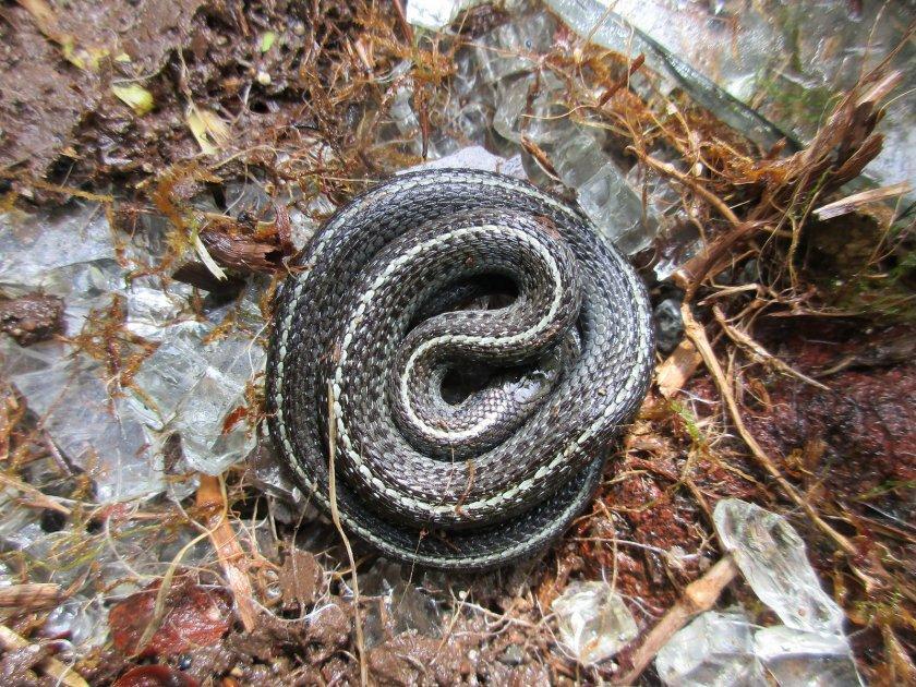 Спячка змеи