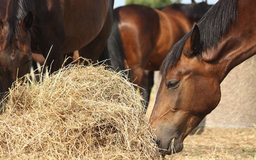 Лошадь кушает сено