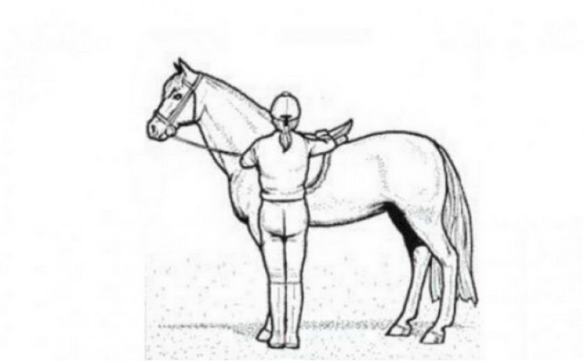 Оседлание лошади