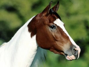 Клички коней