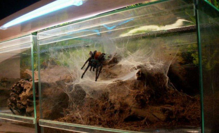террариум для пауков
