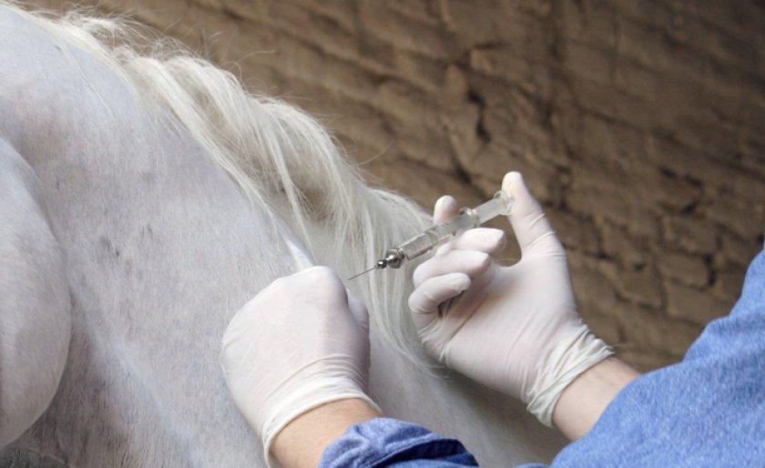 «Ветбицин 5» для лошади